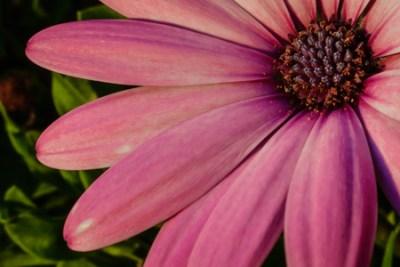 evening petals_300_3-2