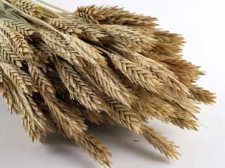 fiber grains