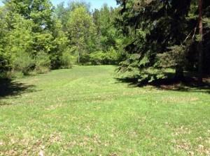 cabin-grass