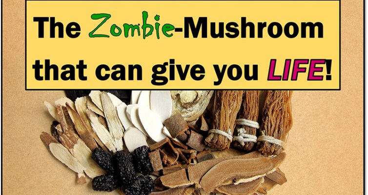 Learn about the many health benefits, ways of usage, safety concerns and history of Cordyceps: the zombie mushroom that can give you life!