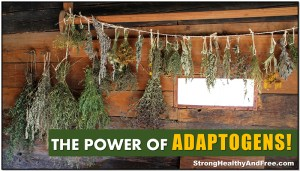 Adaptogens: the ultimate stress-fighting herbs! #antistress #herbs