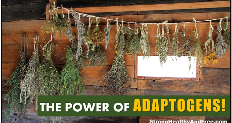 Adaptogens: the ultimate stress-fighters! #antistress #herbs