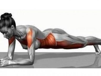 プランクのフォームと効く筋肉