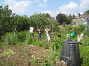 stroud permaculture group shared allotment our second workday
