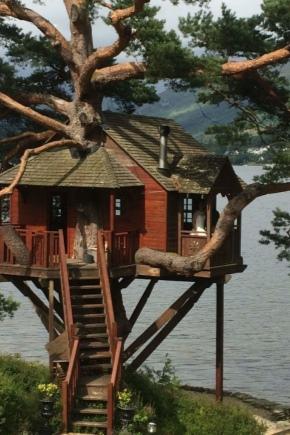 Những ngôi nhà trên cây là gì và làm thế nào để xây dựng chúng?