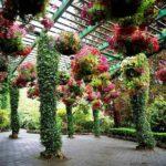 Zawieś doniczki z obfitymi roślinami na górze - a łuk stanie się jeszcze bardziej elegancki