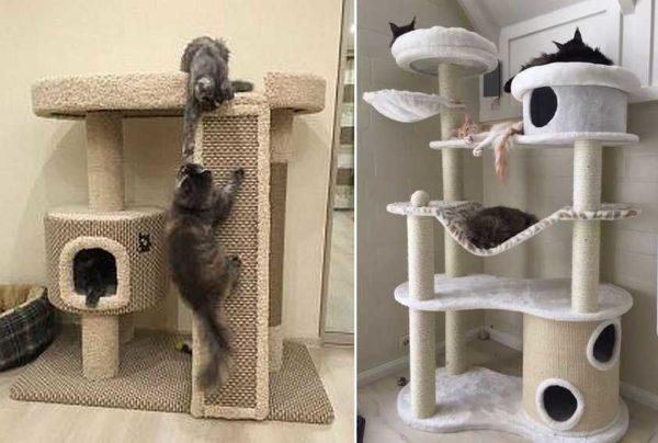Lazalks e Hammocks - Geralmente gosta de gatos