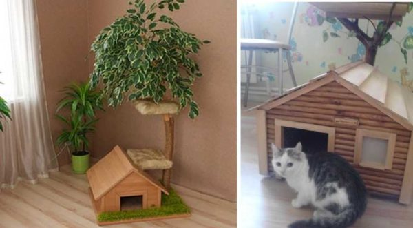For katte med killinger er huset velegnet på gulvet