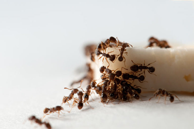 """Ants löysi ruokaa - hyvä syy """"Crossing""""!"""
