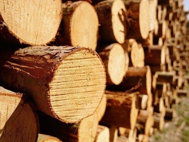 Хвойную древесину нельзя отнести к оптимальному выбору для бани
