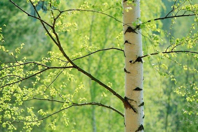 Заготовка дров для бани имеет определенные народные традиции