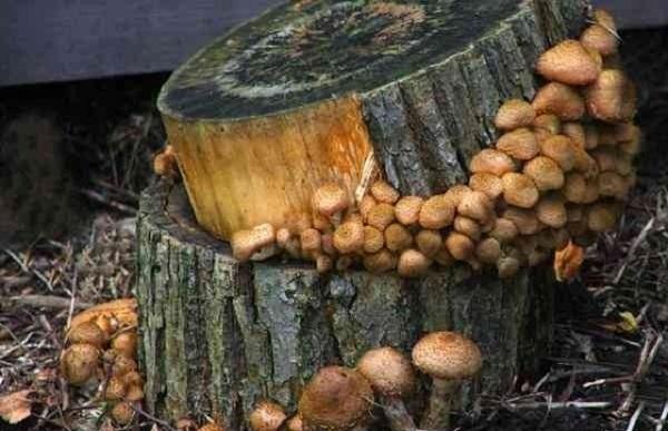 Grigliata nei funghi naturali ha un tipo diverso e persino il gusto