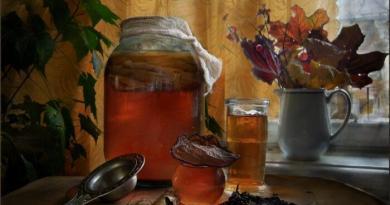 Чайный гриб: полезные свойства и противопоказания, фото