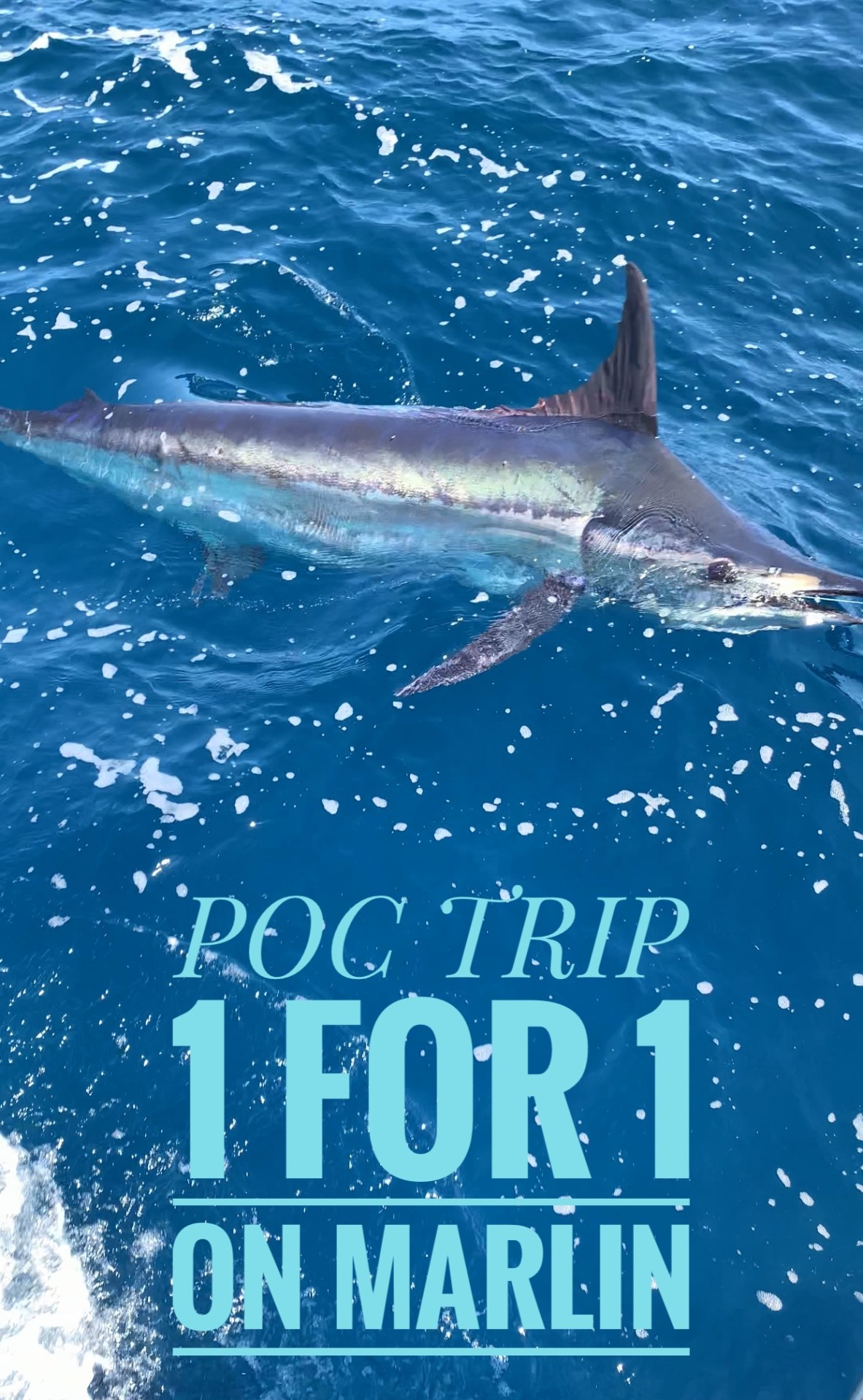 POC-MARLIN-FISHING-TRIP