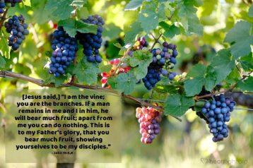 Commentary on Acts 9:26-31; 1 John 3:18-24; John 15:1-8