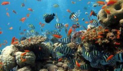 St thomas dive sites