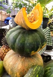 Part of the pumpkin harvest from Sweets Man Farm.
