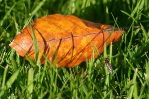 1st Autumn Leaf
