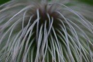 Close Up 10