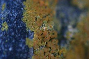 Close Up 15