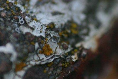 Close Up 6