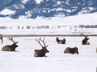 First time I saw this picture, I wondered what happened to the other half of the middle elk.