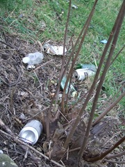 Litter on grass verges in Carlton