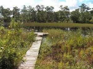pond in Southwood of Stuart FL