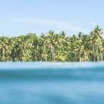 Palm Tree Paradise - © stuart smythe