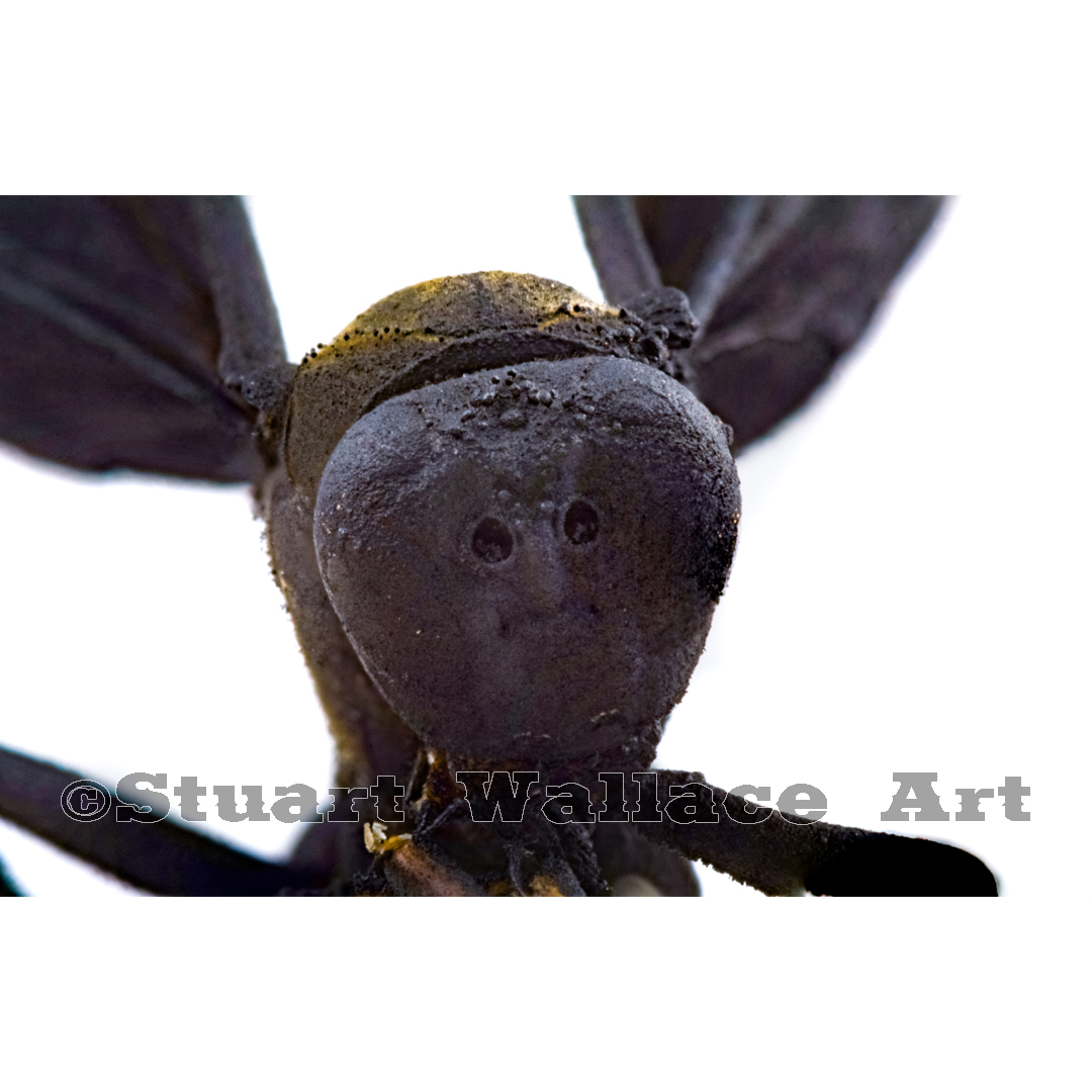 41 WM 709: Macro Of Black Wasp Face