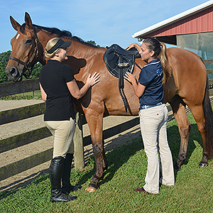 Custom saddle fitting from Stubben