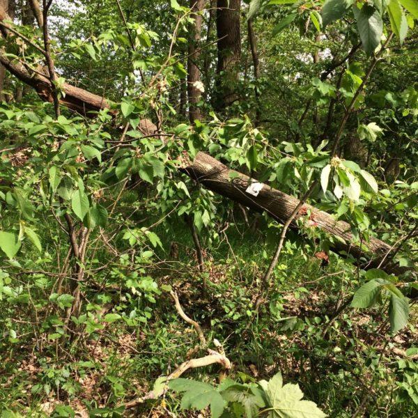 Umgefallener Baum mit aktivem Zeichen