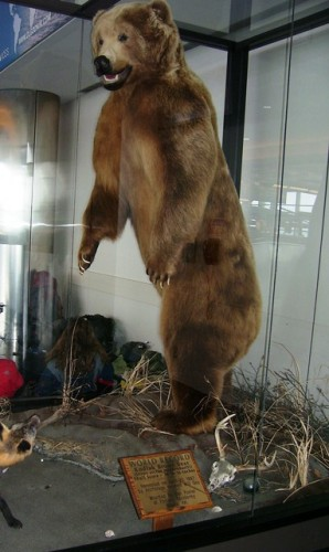 Biggest Bear Anchorage Airport