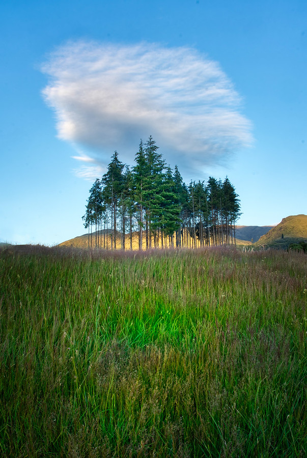 Lonely Clouds and Trees at the Hills – Stuck in Customs