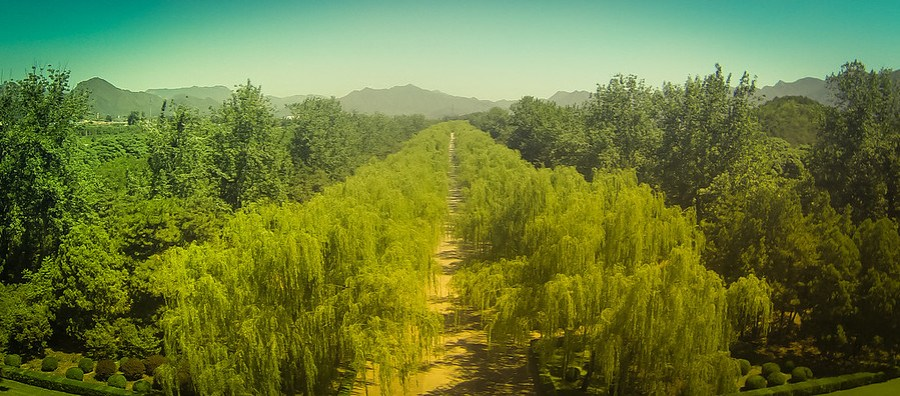 Willow Path