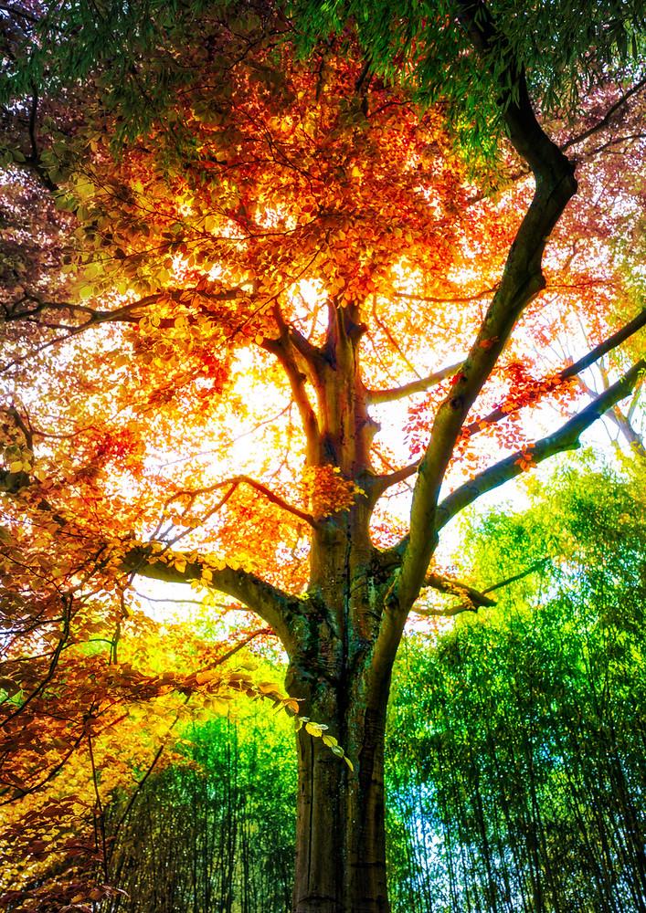 A beautiful tree in Monet's garden.