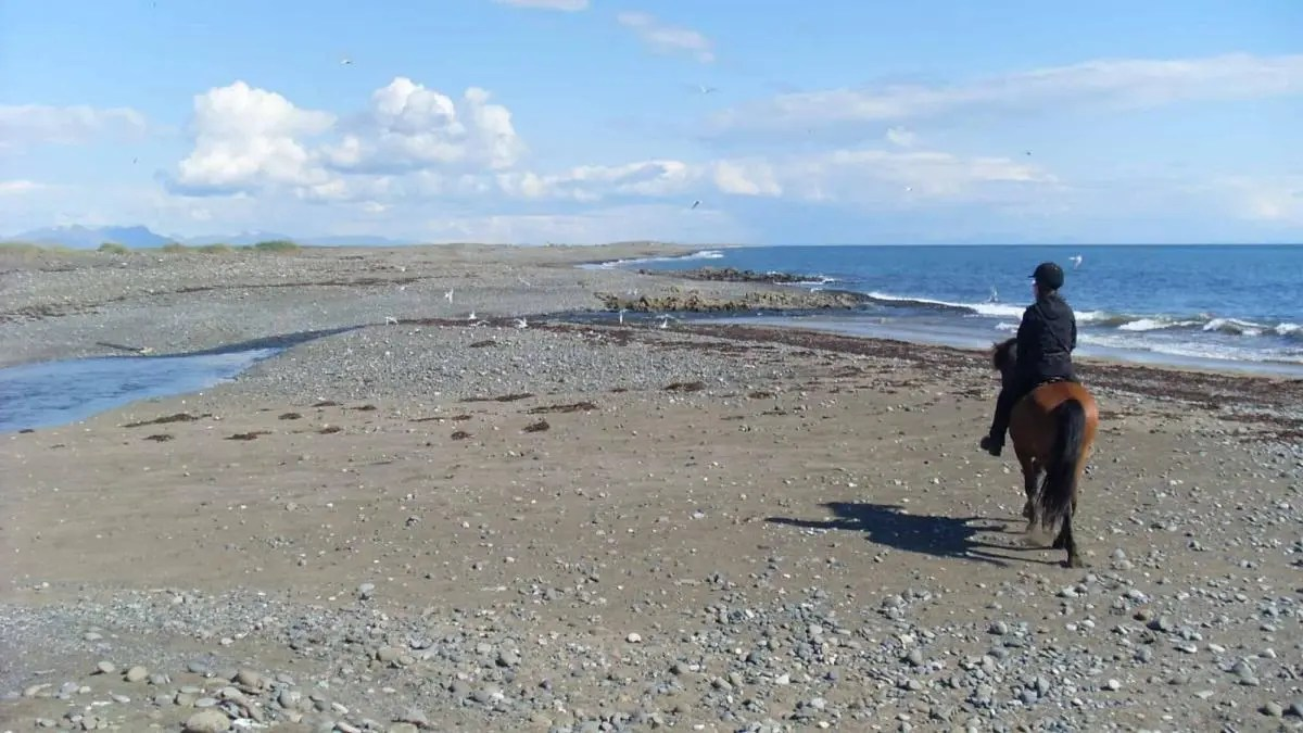 Rent a horse in Iceland and Experience the Viking Steed