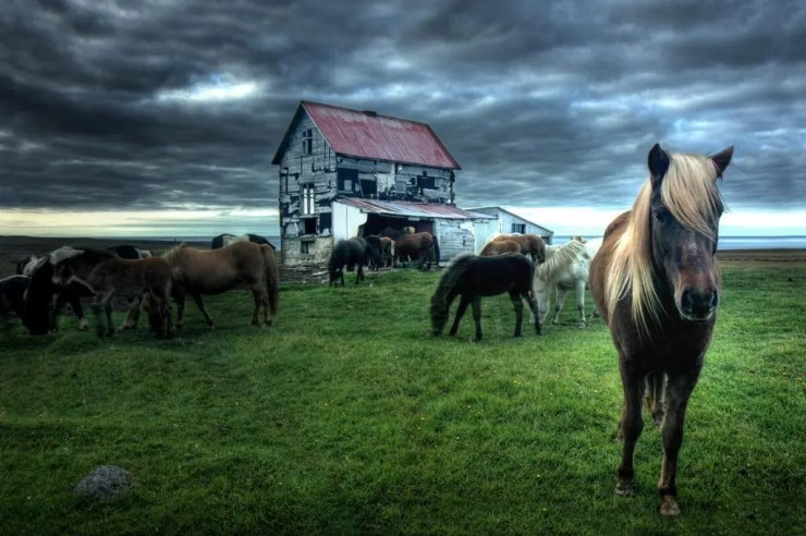 Horses at abandoned farm in Skagafjordur. Few months after this picture was taken the house blew away in a storm.