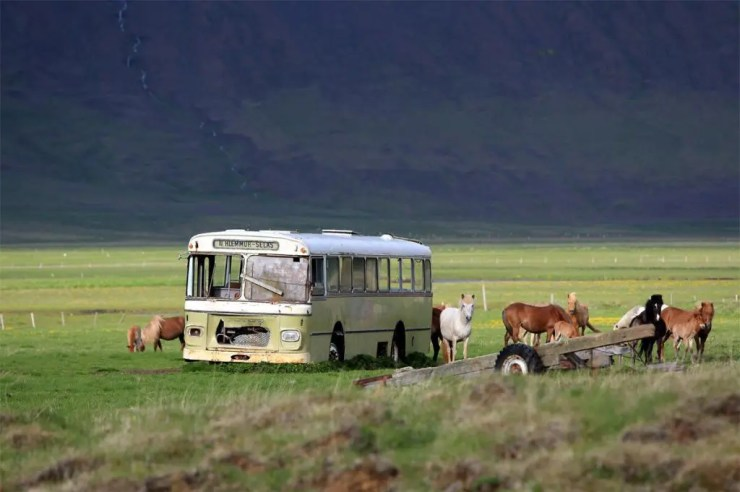Horses taking the bus.