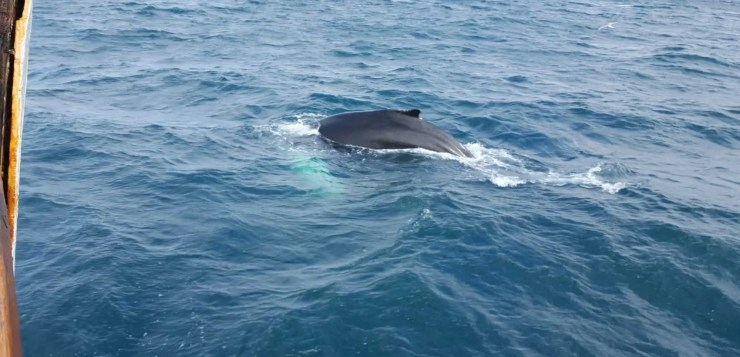 Whale watching in Iceland is a contact sport!