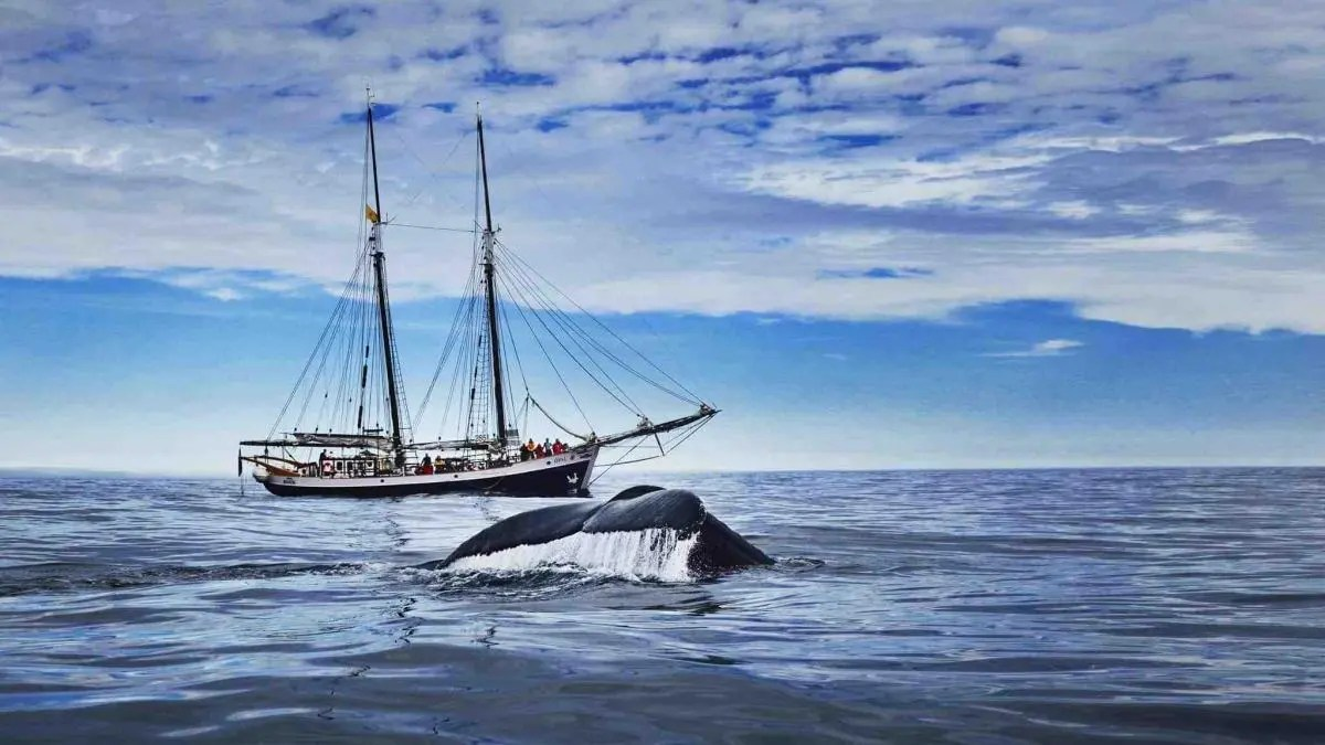 Pioneering Eco Friendly Whale Watching in Iceland
