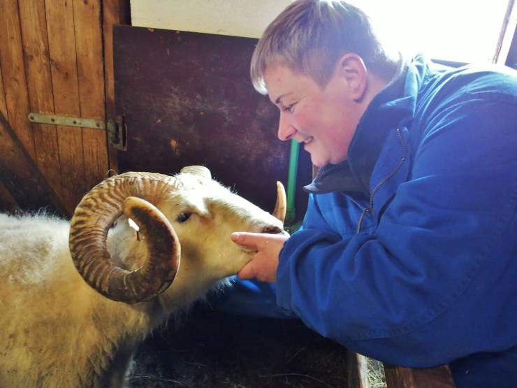 Eydís makes sure that this ram is nice to the guests.