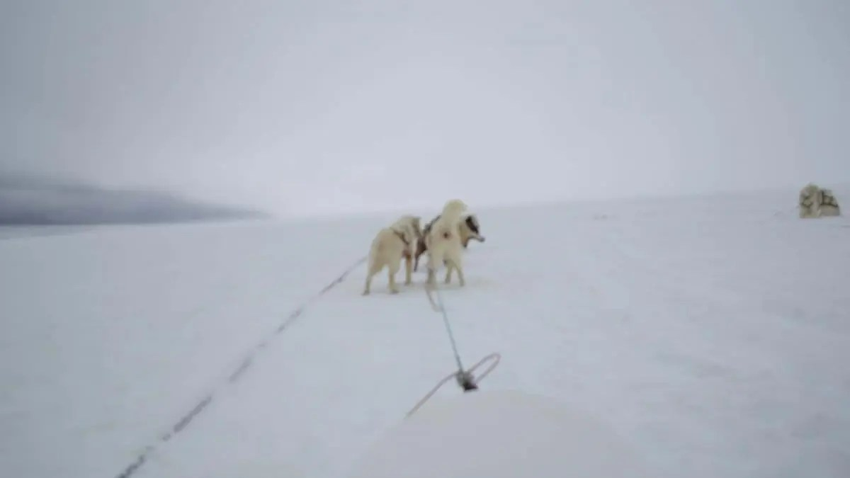 Iceland Dog-sledding Video – See the Stunning Landscapes of Iceland