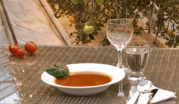 Tomato soup at Friðheimar restaurant in Iceland.