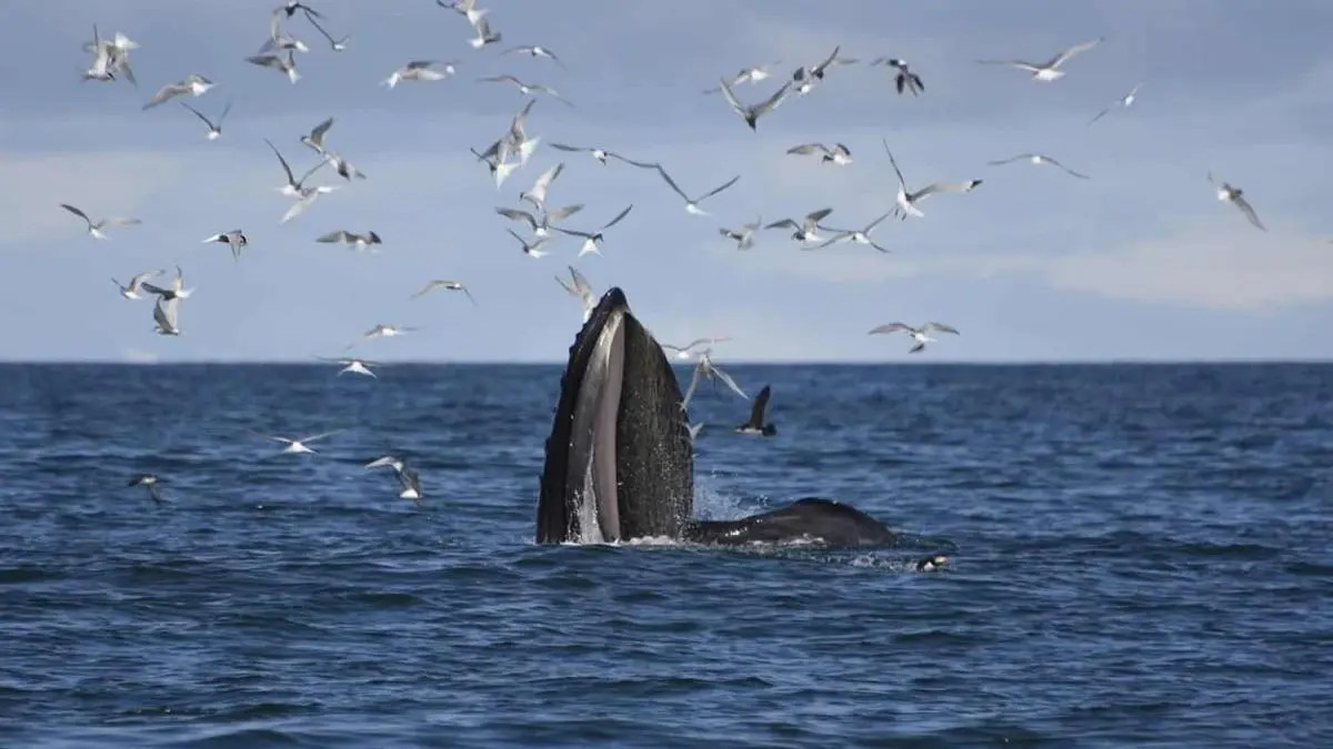 Get 10% off Whale Watching with a model company