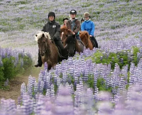 Riding a horse in Iceland