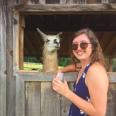 llama in a window with girl standing on its right at Divine Llama Winery - best winery in the yadkin valley