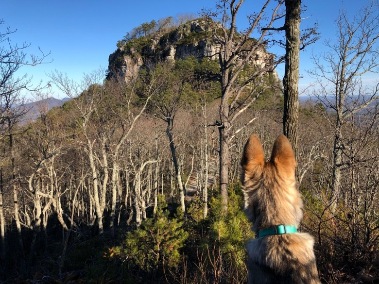 Back of dog's head while looking at the mountain.