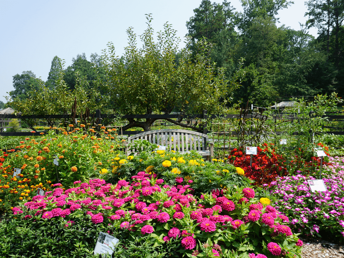 bench in colorful flowers