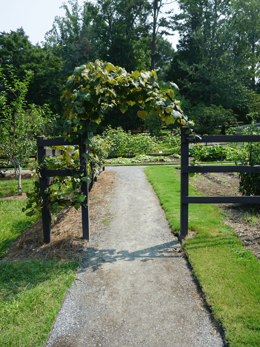 wooden arch with grape vine on it